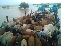 Z dlouhodobého hlediska je největším problémem, že lidé přišli o úrodu a hospodářská zvířata, tedy základní zdroje obživy. (Foto: Archiv ČvT)