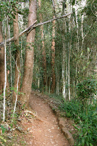 Simpson Falls hiking trail, Mt Coot-tha
