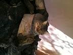 Ο Νέλσονας βρήκε το κατάλληλο ξύλο για ξάπλα