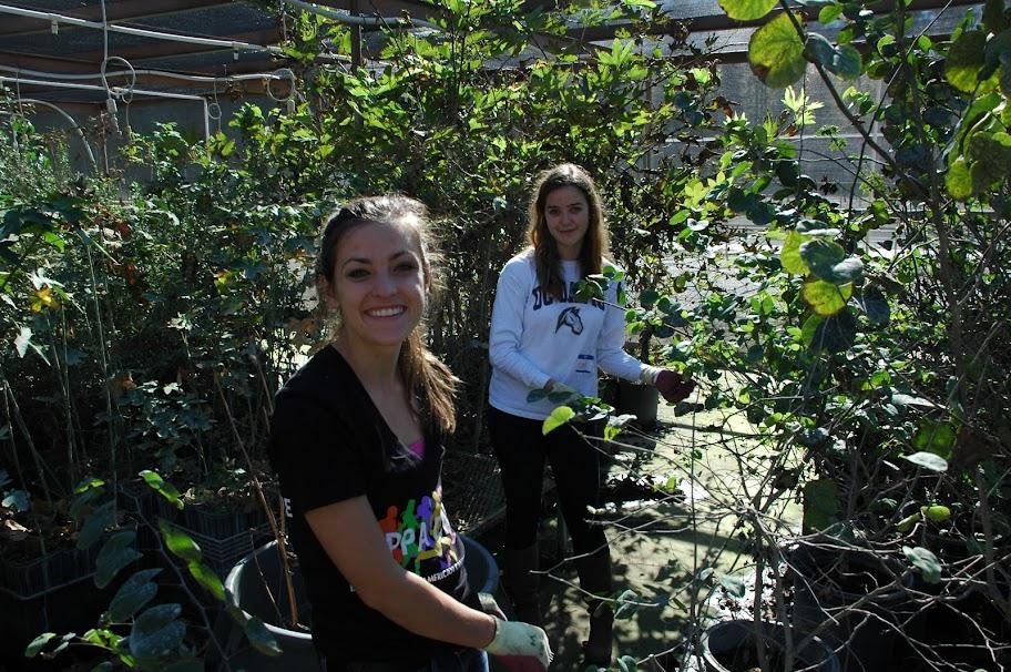 Native Plant Nursery Event Tuesday Morning H Creek