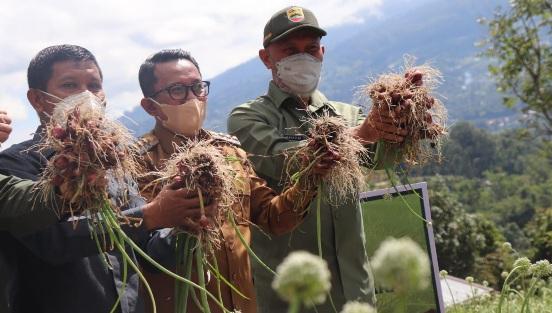 Gubernur: Pertanian Sektor Paling Potensial Dikembangkan di Sumbar