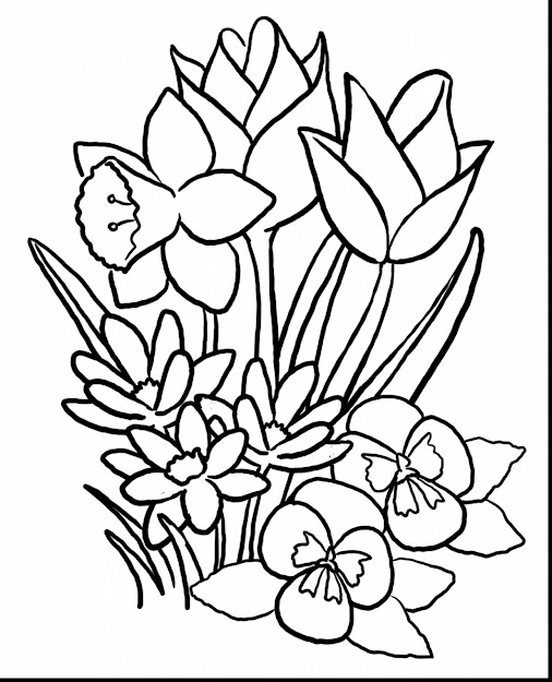 Amazing Spring Flower Coloring Pages With Spring Color Pages And Spring  Coloring Pages For Adults