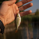 20150725_Fishing_Bochanytsia_046.jpg