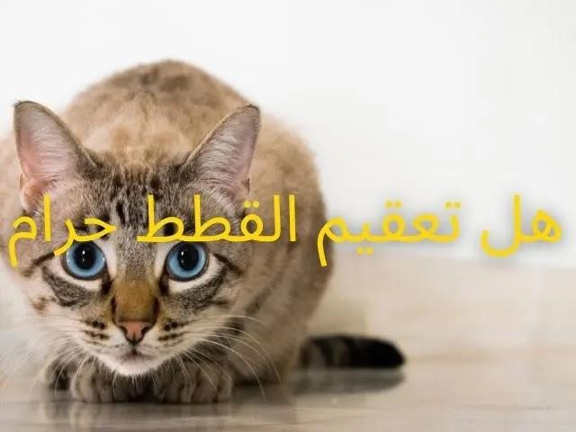 هل يجوز تعقيم القطط إسلام ويب