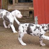 Thelma & Garths 5/27/10 litter - IMG_1709.JPG