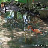 04-07-12 Homosassa Springs State Park - IMGP0053.JPG