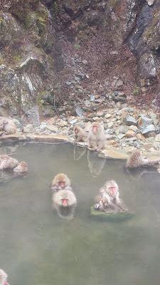 Jigokudani Snow Monkey Park - On the left middle, their heads are so fluffy! Then on the middle right, the baby sitting on a rock with mom