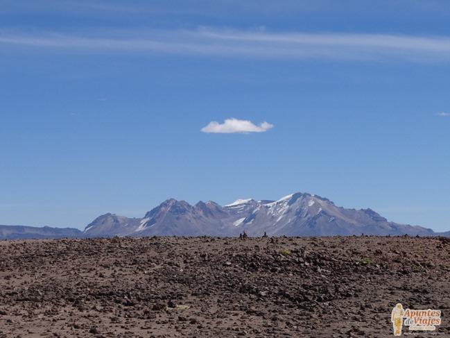 Vicuñas Volcanes Arequipa Chivay Perú 33