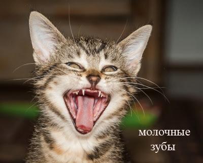 возраст кота