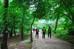 정릉 숲길