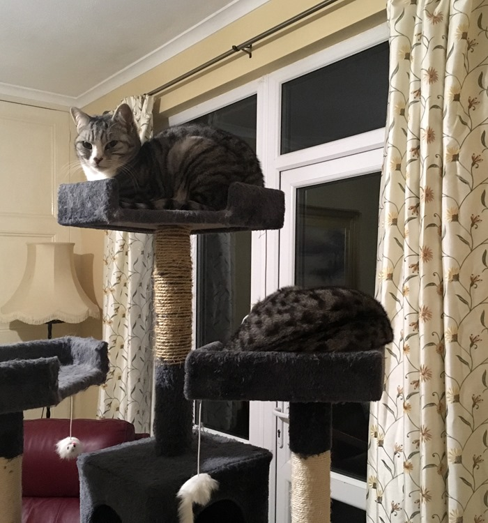 07 Both Kitties on Cat Tree 14-1-19
