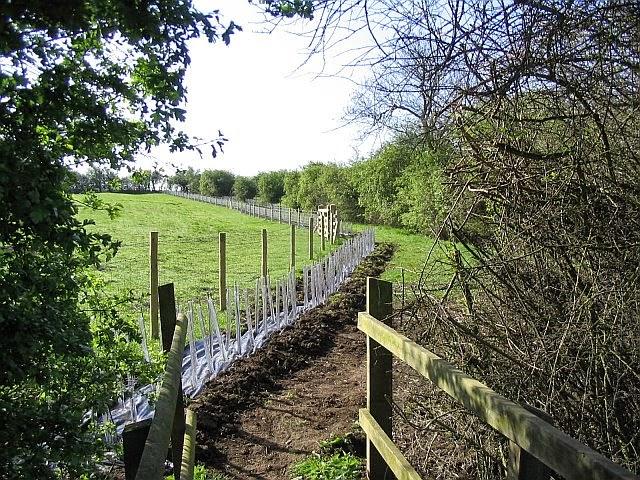 Grassfield Footpath - Hedge Planting - 5358828510233_0_BG.jpg