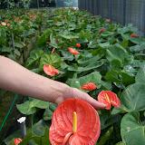 Cultivo de plantas de ...