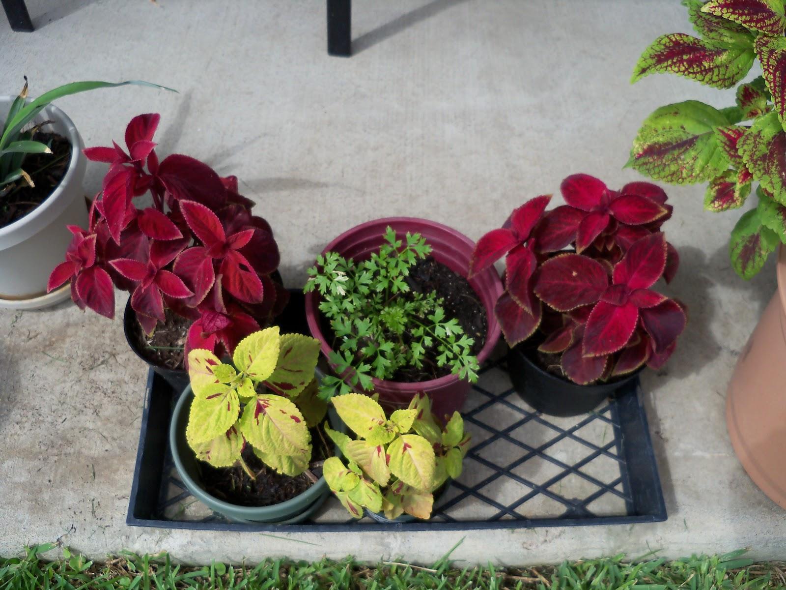 Gardening 2010, Part Three - 101_5251.JPG
