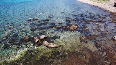 Photo: Excellent snorkeling here