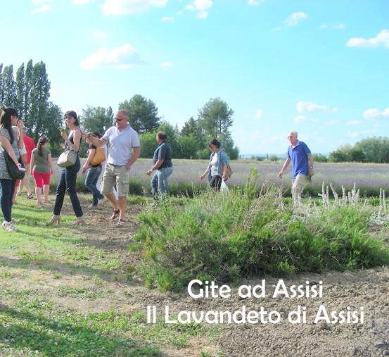 Il nostro catalogo piante il lavandeto di assisi vivaio - Il giardino dei ciliegi assisi ...