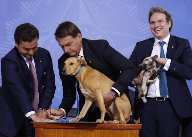 Bolsonaro sanciona lei que aumenta a pena para quem maltratar cães e gatos