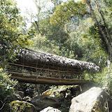 Près de Kurulu (Nord-Est de la Vallée de la Baliem), pont couvert à Air Garam et biotope de Delias (1800 m), 16 août 2009. Photo : Jacques Marquet