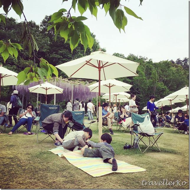 在最美的季節遇見足利紫籐花卉公園:門票交通攻略實況(下)13