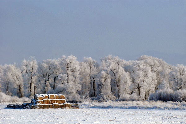 hay bales and snow