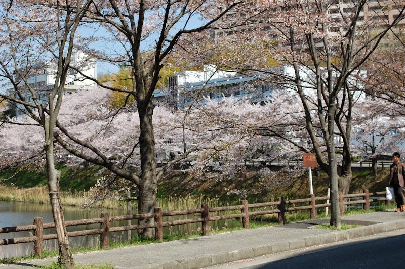 2014 Japan - Dag 9 - jordi-DSC_0733.JPG