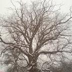 Зимний Вантит 119.jpg