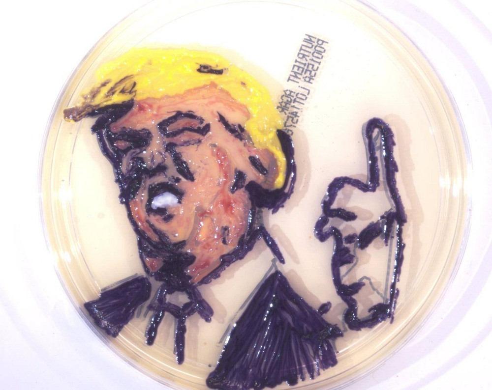 microbial-art-4