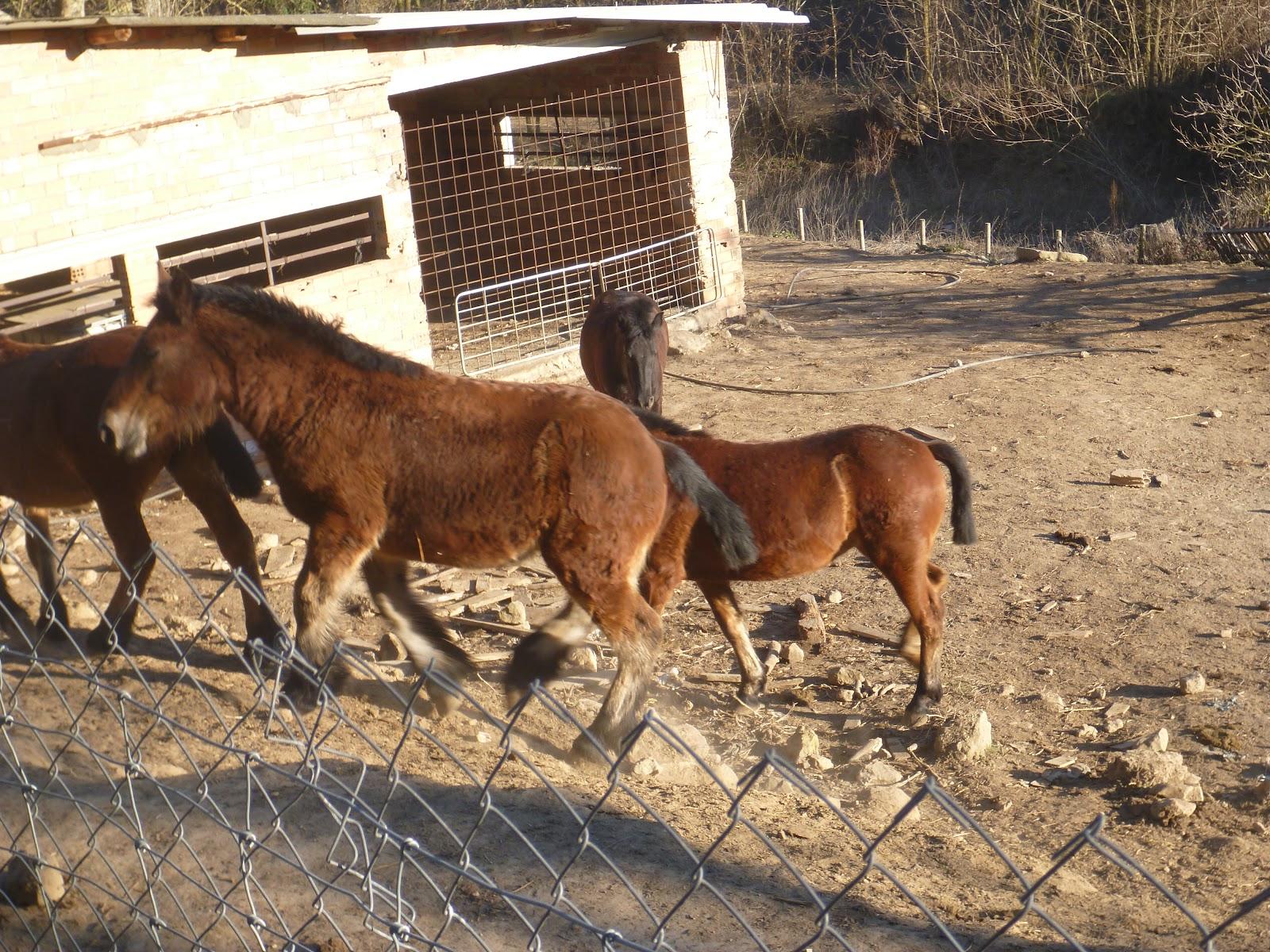 Sortida Castellterçol Raiers - P1000274.JPG
