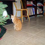 Christmas 2013 - 115_9711.JPG