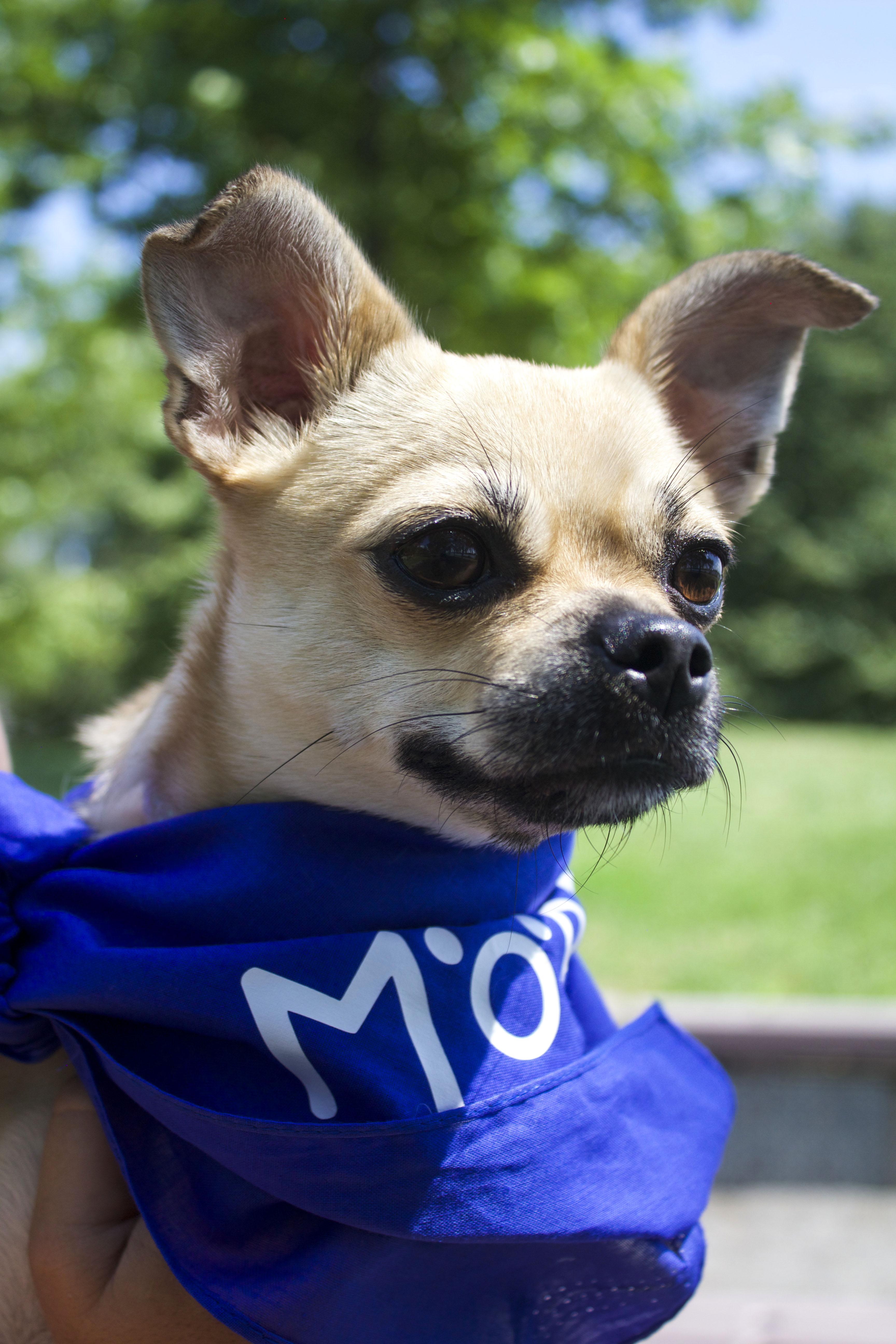 Les Mordus services canins image
