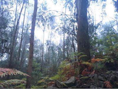 Santjago ceļš. 24. diena. Mežs.