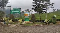 50 ribu wisatawan ditargetkan berkunjung ke Agrowisata Kaligua