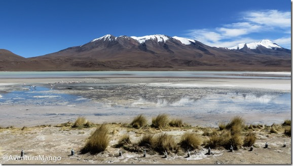 Laguna Hedionda - Altiplano Boliviano