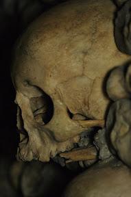 Closeup on a skull