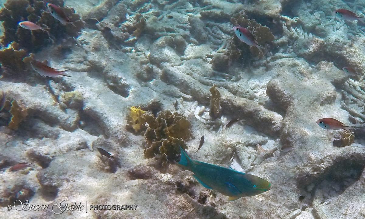Bonaire GOPR0552