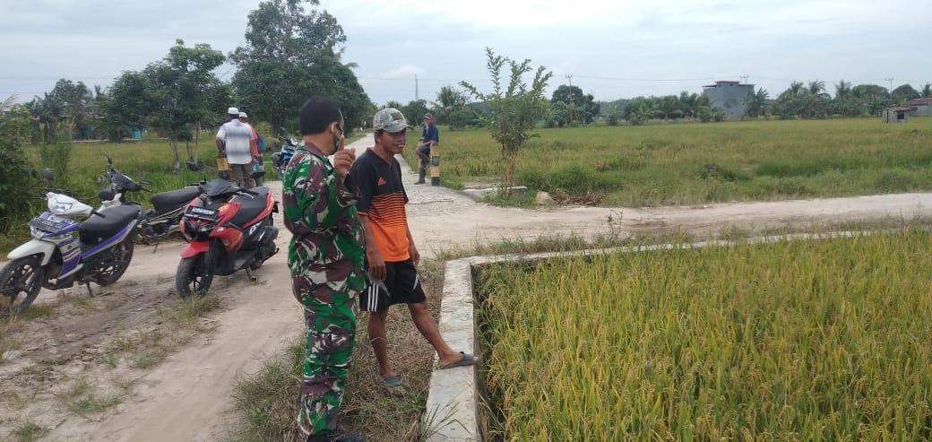 Babinsa Desa Semangko Koramil -02/Muara Badak Terus Mendampingi Kepada Petani