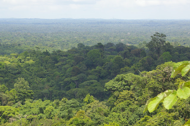 Paysage près de Cacao (Guyane). 23 novembre 2011. Photo : J.-M. Gayman