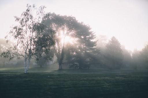 Morning Glory. Photographer Sarah Kierstead