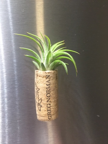 airplant cork magnets