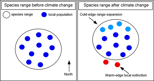 "Hypothetical example illustrating the two components of a geographic range shift associated with climate change. The large open circle indicates the species' overall geographic range. Small dark blue circles indicate populations before climate change. After climate change, the overall geographic range is shifted northward (large open circle), both through the range expansion (new populations; small light blue circles) added at the northern, ""cold"" edge of the species range and range contraction (local extinction of original populations; small red circles) at the southern, ""warm"" edge of the species range. Similar patterns occur for range shifts along an elevational gradient. Modified from Cahill, et al., 2013. Graphic: John J. Wiens, 2016 / PLOS"