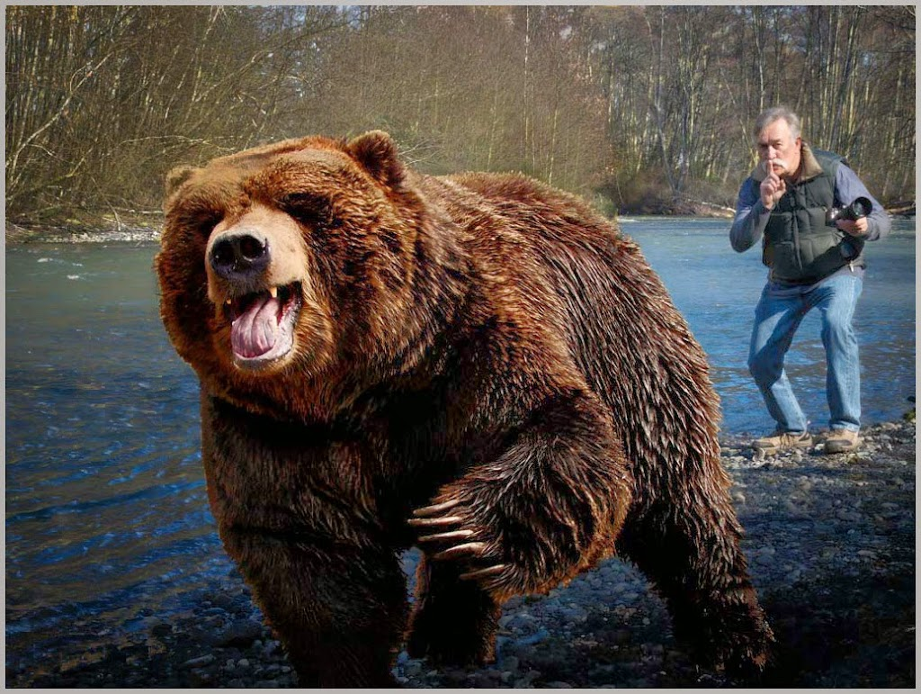 """Bear Encounter"" by Tim Snyder -- 2nd Place Digital General A"