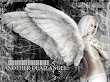 Dead Angel Vol Four 888667