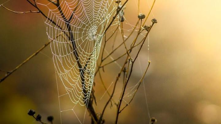 Tấm mạng nhện