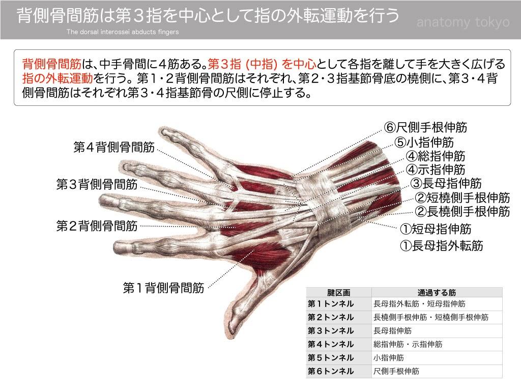 2013-a23-p.165-1:Atlas-of-Human-Anatomy-and-Surgery.jpg