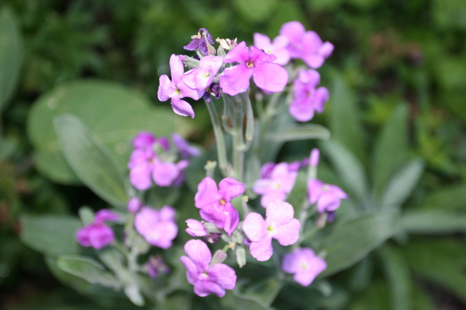 Gardening 2012 - IMG_2787.JPG