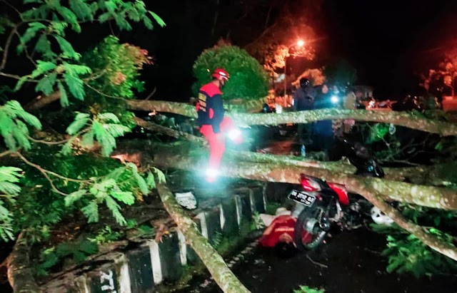 Pohon Hutan Kota Tumbang di Kapuas,  2 Warga Terluka