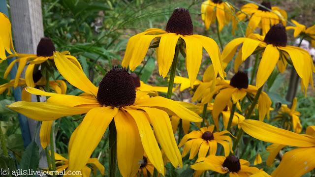 Летнее настроение - цветы