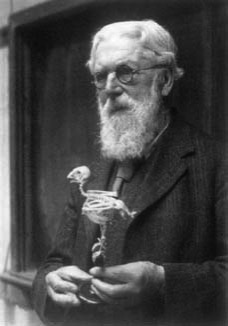 D Arcy Wentworth Thompson 1860 1948