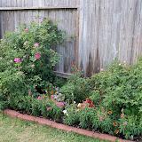 Gardening 2011 - 100_8803.JPG
