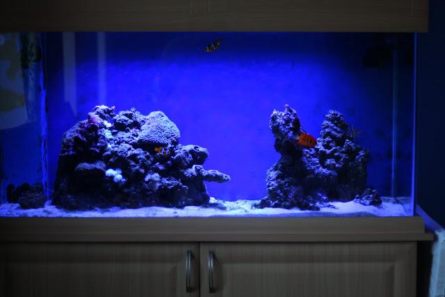 Pumps (water) Constructive Jebao Marine Coral Reef Aquarium Fish Tank Sw-2 Sw-4 Sw-8 Sw-15 Rw-4 Rw-8 Rw-15 Selected Material